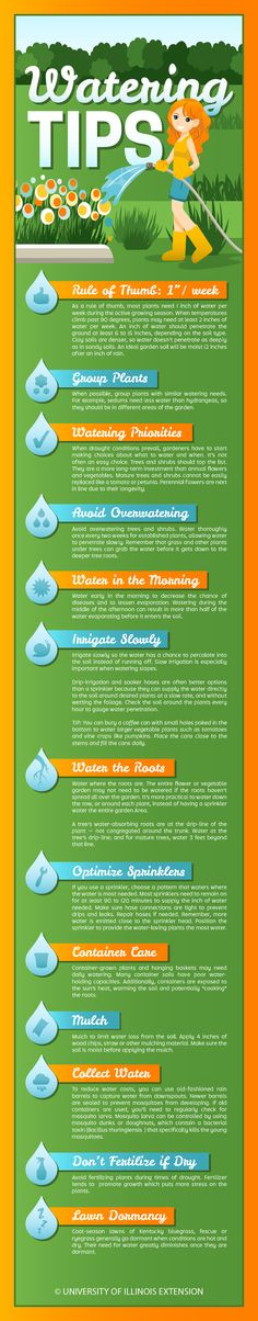 Watering Tips for Home Gardeners — especially useful for hot summer days and drought!