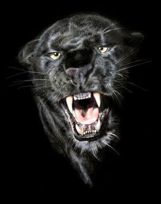 Image detail for -Black Panthers