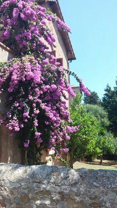 populonia, Toscane, Italië