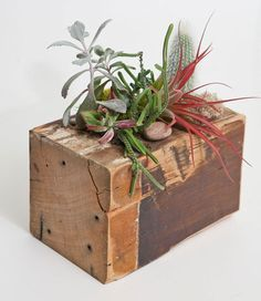 Reused wood beam turned into small succulents planter.