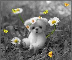 daisies and teddy bear color splash