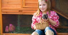 Backyard chickens are very trendy these days, but raising chickens definitely has its challenges that first-timers might not be aware of before they begin.