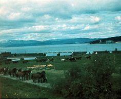 Steinkjer 1940, Sannan mot Figga. Tyske soldatar med ei hestekolonne