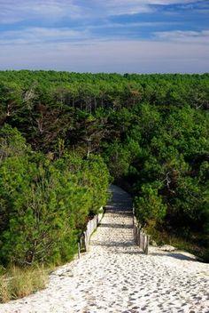 forêt landaise, plage, dune, sable, paysage