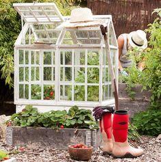 Bara älskar detta lilla växthuset, placerad på en pallkrage. Lantliv.com