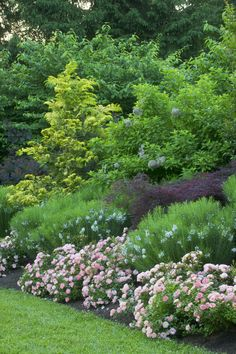 Beautiful use of Apricot Drift® roses in the landscape, as shown by hallsgarden.com.
