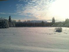 My backyard in winter.