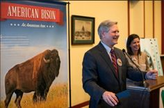 Symbol of America: Senate Approves Bison as National Mammal