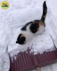 Funny Cute Cats, Cute Baby Cats, Cute Funny Animals, Kittens Cutest, Cats And Kittens, Cute Dogs, Super Cute Animals, Cute Little Animals, Cute Animal Videos