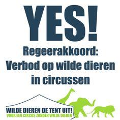 Het regeerakkoord van PvdA en VVD bevat een verbod op het gebruik van wilde dieren in circussen. WSPA Nederland pleit al jaren voor een verbod op het gebruik van wilde dieren in circussen en is sinds 2008 een van de steunpilaren Wilde Dieren de Tent uit. Goed nieuws voor veel olifanten, tijgers, kamelen en andere circusdieren.