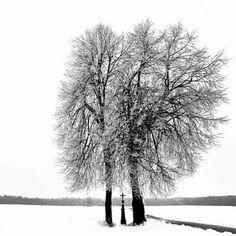Wintertrees by Helena Ludwig #tree #winter