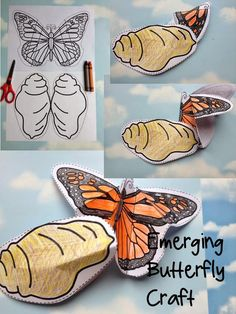 Butterfly Life Cycle Craft -- Emerging Butterfly Craft Emerging Butterfly Craft by Robin Sellers Kindergarten Science, Teaching Science, Science For Kids, Science Activities, Sequencing Activities, Life Cycle Craft, Butterfly Life Cycle, Butterfly Crafts, Butterfly Art