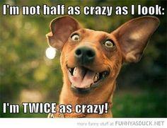 ... Twice as Crazy ...