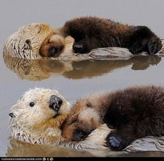Well..yeap..sea otters don't just hold hands while sleeping..