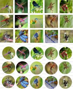 Dragonflies Digital Collage 1 inch / 56 by LisaChristines on Etsy, $1.50