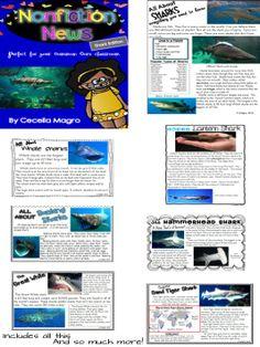 Find the Main Idea: Shark
