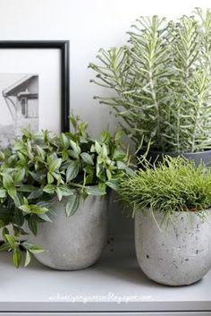 Ein Schweizer Garten: oder wie der Schreiner k - Jardin Vertical Fachada Outdoor Planters, Outdoor Landscaping, House Plants Decor, Plant Decor, Balcony Garden, Garden Pots, Container Plants, Container Gardening, Pot Jardin