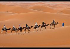 camel trekking in the Sahara at...