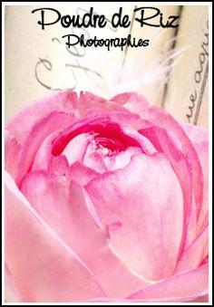 Rose http://13poudrederiz.canalblog.com/