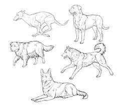 How to Draw Dogs: Monika Zagrobelna