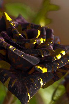 sarı ve siyah muhteşem uyum