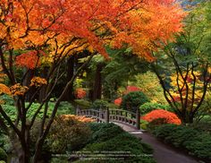 Portland, Oregon Japanese Gardens