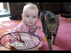 Amazing Cat protecting babies - YouTube | See more fun videos here: http://gwyl.io/