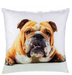 Barry Bulldog - Photographic Cushion Cover Cushions, Cover, Dogs, Animals, Throw Pillows, Toss Pillows, Animales, Animaux, Pillows