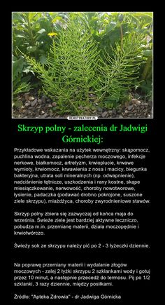 Herbs, Diet, Herb, Medicinal Plants