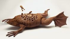 Suriname Toad - Kids getting under your skin? It's no joke for a female Suriname sea toad — she gives birth to her offspring right out of holes in her back.
