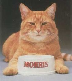 Morris the Cat was the mascot for the 9 Lives brand of cat food. Since the 1970s, the stout orange tabby has been famously finicky in his food choices.