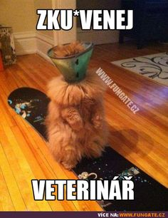 Humour quotes, funny jokes, jokes funny, hilarious funny …For the best humour and hilarious jokes visit www. animals silly animals animal mashups animal printables majestic animals animals and pets funny hilarious animal Funny Animal Pictures, Funny Animals, Cute Animals, Funny Photos, Crazy Cat Lady, Crazy Cats, Gatos Cool, Funny Commercials, Fluffy Cat