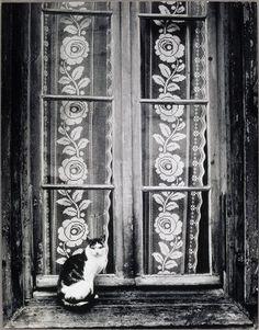 Brassaï, 1937. Chat au rideau de dentelle
