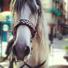 instagram.com/thepacons Horses, Hair Styles, Animals, Beauty, Instagram, Hair Plait Styles, Animales, Animaux, Hair Makeup