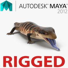 Blue Tongued Skink 3d model Rigged for Maya