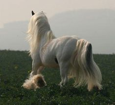 cloud, beautiful such beautiful mane and tail
