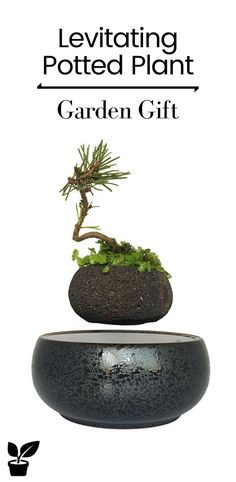 this is a magic air bonsai which can float in the mid-air. Air bonsai include three parts: pot, base and power adapter, see below picture for better understanding. Air Plants, Potted Plants, Cactus Plants, Floating Plants, Beautiful Decoration, Bonsai Garden, Grow Your Own Food, Ac Power, Garden Gifts