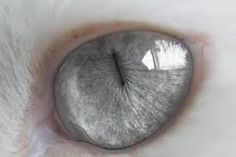 Image result for silver aesthetic