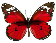 Red Butterfly PNG Clipart