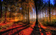 amazing-forest-207870.jpg (1920×1200)