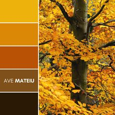 Autumn tree with golden leaves Color Palette #391 – Ave Mateiu - Fall Autumn 2020, color palette, color palettes, colour palettes, color scheme, color inspiration, color combination, art tutorial, collage, digital art, canvas painting, wall art, home painting, photography, weddings by color, inspiration, vintage, wallpaper, background, rustic, seasonal, season, natural, nature