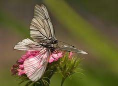 Photo L, Top Photo, More Photos, Butterflies, Photography, Photograph, Fotografie, Butterfly, Photoshoot