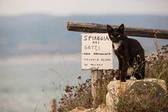 LA SPIAGGIA DEI GATTI IN SARDEGNA FOTO - GIF ANIMALI..GNOMI..NATURA..AMICI