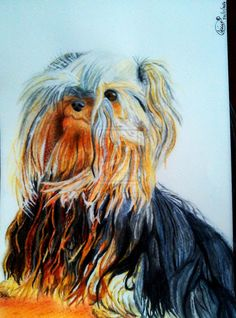 Friend's Dog Yorkshire terrier painting by me