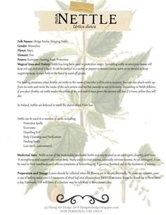Herbarium: Magical and Medicinal Uses of Nettle – witch etc – Home crafts Healing Herbs, Medicinal Plants, Natural Healing, Herbal Plants, Magic Herbs, Herbal Magic, Natural Medicine, Herbal Medicine, Witch Herbs