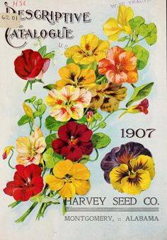 Harvey Seed Co 'Descriptive Catalogue' (1907).Harvey Seed Co.