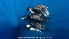 1st place, portrait category, 'Pilot Whales'  A pod of pilot whales was the subject of this portrait image, taken in waters off of Nice, France. | www.piclectica.com #piclectica