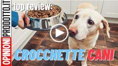 ⫸Croccantini o Crocchette per Cani? come scegliere il miglior alimento per il tuo amico a 4 zampe del 2020 Dog Bowls