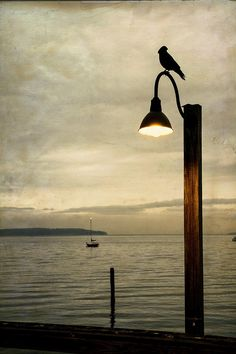Waiting Photograph by Mary Lee Dereske. Shop maryleephoto.com for fine art prints (framed, canvas, metal, and wood), greeting cards, and more. #fineart #gifts #homedecor #crow #raven #sea