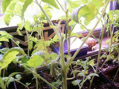 My Indoor Garden Gallery in June 2010